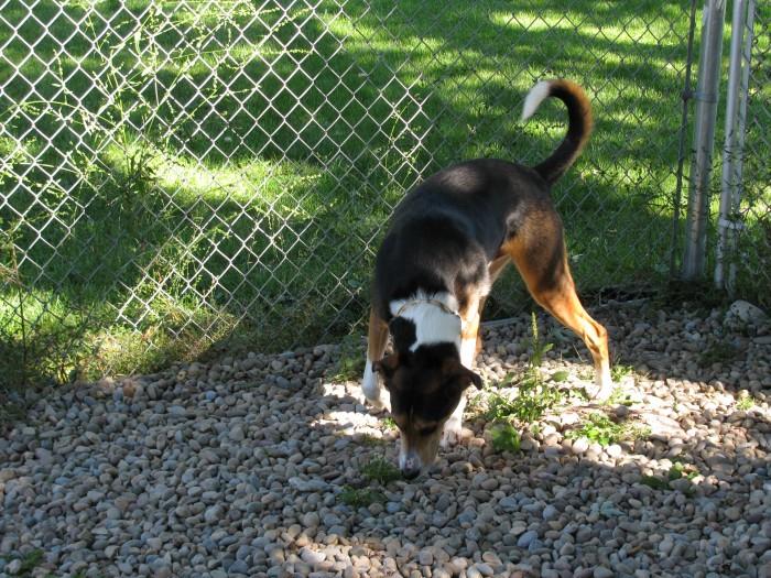 Digger playing in yard