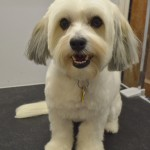Echo from Albany looks cute after his grooming