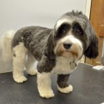 Monty looks cute after his grooming